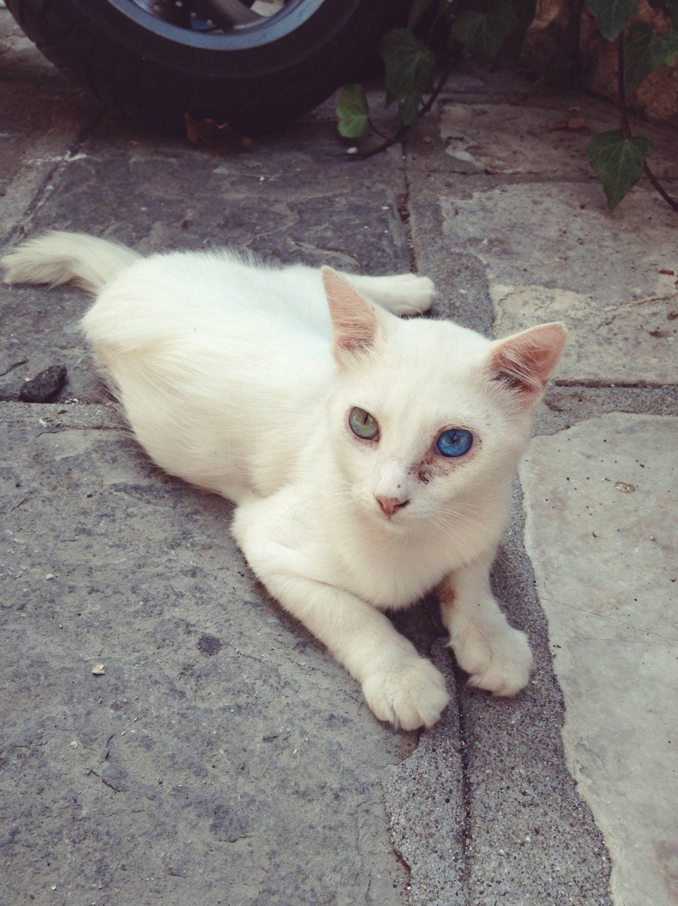 Corfu Cat – eatmeplease.pl